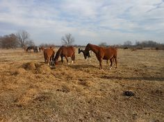 More Charges Expected in Oklahoma Horse Abuse Case | Rate My Horse PRO