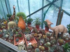Kulla v Bratislava, Bratislavský kraj Bratislava, Aesthetic Clothes, Four Square, Garden, Plants, Garten, Gardening, Plant, Outdoor