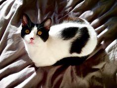 Loaf of Cat. https://ift.tt/2q5ONlh cute puppies cats animals