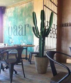 Grote cactus | Stijlvol én gemakkelijk | Chicplants Garden Pots, Potted Garden, Landscaping Plants, Plant Decor, Planting Succulents, Cactus Plants, House Plants, Loft Ideas, Landscape