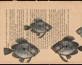 Pag.32, Acquario di pesci sanpietro.Posizione pagina: orizzontale.