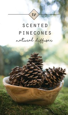 """We are inspired by all fall has to offer. Visit """"The Blend"""" A blog by Rocky Mountain Oils to learn how to make your own pinecone potpourri."""