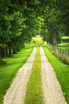 Green Farm Road by Elena Elisseeva