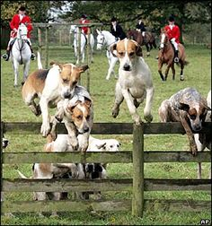 English fox hunting  www.thewarmbloodhorse.com