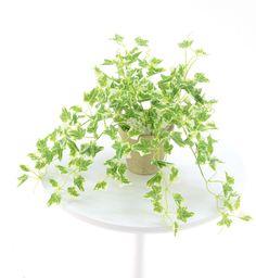 光触媒人工観葉植物 8374「ミニ斑入りアイビー 180Lvs 30cm(素焼きポット)」