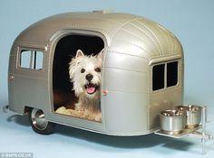 Hund i husvagn