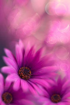 #Bokeh Photography Deep pink by Flávio Silva on 500px