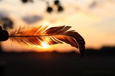 Light of a Feather