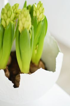 DIY: Eierschalen Blumentöpfe aus Pappmaché » alexandrawinzer.com Happy Easter, Celery, Eggs, Vegetables, Spring, Flowers, Food, Brunch, Decoration