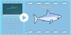 Under the Sea Shark Video PowerPoint - under the sea, sharks