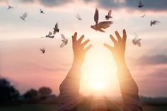 Photo about Woman praying and free the birds enjoying nature on sunset background, hope concept. Image of human, hand, grass - 99680945 The Power Of Forgiveness, Forgiveness Quotes, Viktor Frankl, Sunset Background, Les Religions, Spiritual Healer, Old Soul, Humility, Mantra