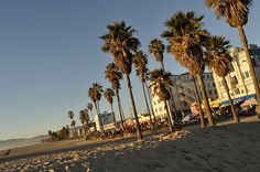 venice beach - Google Search
