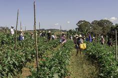 Expedição Farm to Table: Muito Além do Orgânico. http://luizhenriquefoto.com.br - Imagem: Luiz Henrique Fotografia