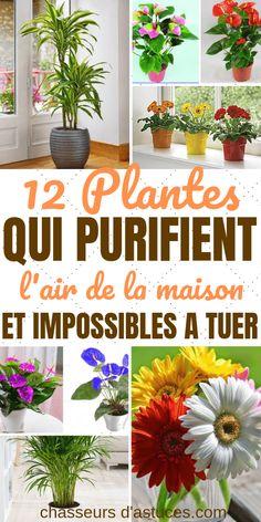 12 plantes d'intérieur (difficiles à tuer) pour purifier l'air de votre maison