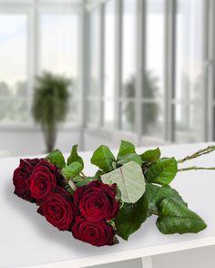 Cei mai frumosi 5 trandafiri rosii