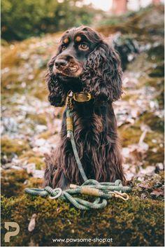 Stelle dein individuelles Set aus Halsband und Leine für deinen Vierbeiner zusammen. Wir fertigen es dann so nachhaltig und umweltschonend wie möglich in unserer Werkstatt von Hand für dich an. Pawsome   Nachhaltiges Hundezubehör   Halsband und Leine   Hundeleine selber machen   Halsband für Hunde DIY Family Dogs, Dog Grooming, Animals, Dog Things, Dog Care, Dog Accessories, Pooch Workout, Sustainability, Animales