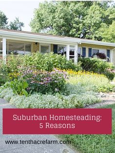 Suburban Homesteading- 5 Reasons