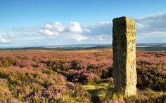 UK national park highlights: Britain's best views Visit Yorkshire, Destinations, Britain, Vineyard, National Parks, Mountains, Nature, Plants, Travel