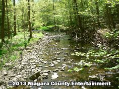 Four marked trails, a small waterfall, diverse flora and songbirds http://niagaracountyentertainment.com niceinfo@niagaracountyentertainment.com