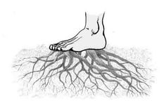 Relación entre los pies y el plexo solar - El sistema simpático está compuesto por varios centros escalonados en la columna vertebral, desde el cerebro hasta la base de la médula espinal, y una par..