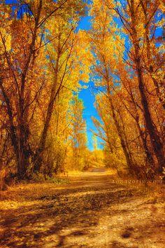 Waiting for autumn | Boise, Idaho
