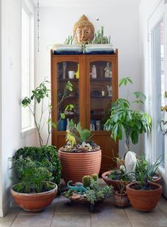 decorating with indoor plants - Google Search