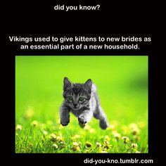 Viking traditions and kittens. (I knew I liked the Vikings) Viking traditions and kittens. (I knew … Cute Funny Animals, Cute Cats, Funny Cats, Iron Age, Crazy Cat Lady, Crazy Cats, Animals And Pets, Baby Animals, Cat Facts