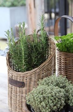love the herbs in wicker baskets - look good on a balcony or courtyard Baskets On Wall, Hanging Baskets, Wicker Baskets, Herb Garden Design, Edible Plants, Live Plants, Tall Plants, Cottage Living, Wicker Furniture