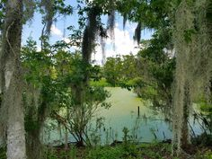Louisiana Swamp taken with my cell phone. [OC] [4032x3024] - Daniel Hill