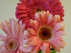 gerber daisy centerpieces | full table view plate setting close up gerber daisy centerpiece