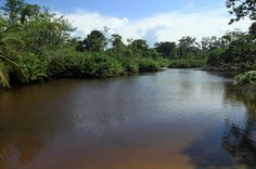cahuita national park attraction page lagoon   - Costa Rica