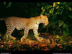 Animais selvagens - Papel de Parede Mobile: http://wallpapic-br.com/national-geographic-fotos/animais-selvagens/wallpaper-37978