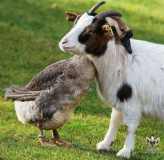 **herbivore best friends who will wreck your shit ((idk enough about goose to know if this is actually aggressive behavior or what))