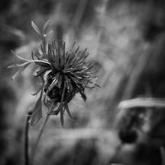 Flora ved Brunebjerg Assens #visitfyn #fyn #nature #visitdenmark #naturelovers #nofilter #natur #denmark #danmark #dänemark #landscape #nofilter #assens #mitassens #vildmedfyn #fynerfin #vielskernaturen #visitassens #instapic #picoftheday #sommer #sky #september #beautiful