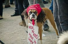 Cute and funny Boxer dogs are the real Internet Stars! Check out the top Boxer Dog Halloween costumes to inspire from! Pet Halloween Costumes, Pet Costumes, Costume Ideas, Animal Costumes, Halloween Ideas, Happy Halloween, Funny Costumes, Halloween Photos, Awesome Costumes