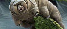 InfoNavWeb                       Informação, Notícias,Videos, Diversão, Games e Tecnologia.  : Conheça a criatura mais resistente do mundo