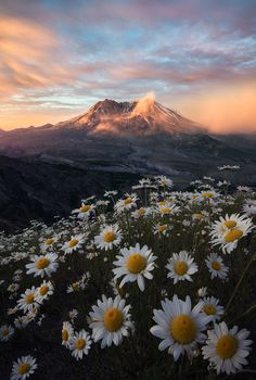 Mt St Helens towering above .You can find Scenery and more on our website.Mt St Helens towering above . Pretty Landscapes, Landscape Photography Tips, Scenery Photography, Camping Photography, Beautiful Nature Photography, Photography Backdrops, Photography Ideas, Photography Lighting, Photography Hashtags