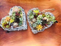 Good morning  Start your day with love and gratitude in your heart. #nzminiaturesucculentlandscapes#sunkissedsucculentsnz#succulentsofinstagram#succulentslover#succulents#proudlyhomegrown#lovemotherearth#ecofriendly#sustainablegardening#homedecor #homedesign #garden#repurposed #upcycle#home #homemade#preloved #forest #terrarium#livingwall#kokedama#japanesemossball#succulentbirdcage#birdcage#terrarium#bonsaitree#cactilove#succulentwall #succulentwallart#cactuslove#succulentheart Succulent Wall Art, Morning Start, Bird Cage, Terrarium, Gratitude, Repurposed, Upcycle, Eco Friendly, Succulents