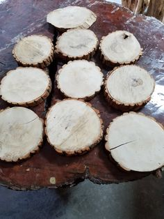 10 pieces /  6-7 inch Sassafras slices by wooddenshop on Etsy