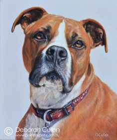 Finlay - American Staffordshire Terrier Dog Portrait Painting - paintmypet by Deborah Cullen American Staffordshire Terriers, Terrier Dogs, Dog Portraits, My Animal, Perth, Tutorials, Painting, Play, Big
