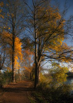 """mistymorningme:  A walk by the pond, Reigate by Berit Watkin Via Flickr: """""""