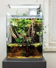 Successful Aquarium - Home to happier fish Garden Terrarium, Terrariums, Paludarium, Aquarium Sump, Nano Cube, Fish Tank Design, Indoor Water Garden, Shrimp Tank, Reptile Room