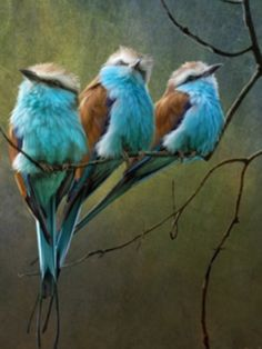 little blue birds- this is too sweet!