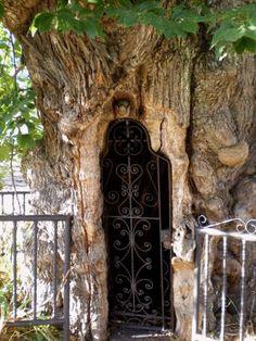 Wrought iron door in a tree. Anybody home?