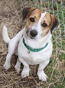 Buy Gilbert's photo and help support Jack Russell Rescue!