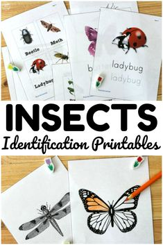 These bug identification printables are so fun for teaching kids about common insect species in the neighborhood! Preschool Printables, Kindergarten Worksheets, Printable Worksheets, Insect Activities, Science Activities For Kids, Insect Crafts, Bug Crafts, Insects For Kids, Social Studies Worksheets