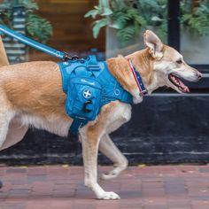 Dog Harness, Dog Leash, Female German Shepherd, Hiking Dogs, Dog Activities, Dog Travel, First Aid Kit, Dog Coats, Service Dogs
