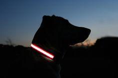 led verlichte halsband voor de hond