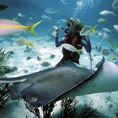 scuba diving in bali!