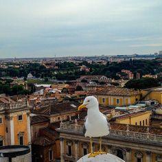 Quando for a Roma não deixe de subir no topo do monumento Vittorio Emanuele, a vista para a cidade é incrível !